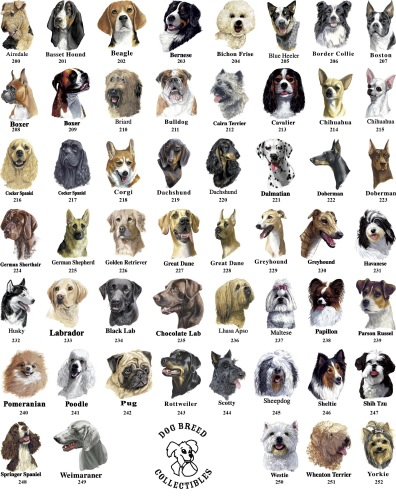 Dog Breeds That Will Bread Well Together