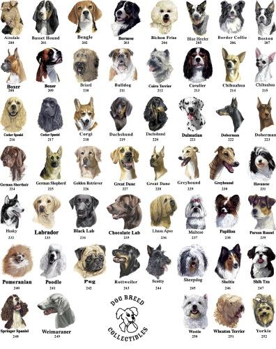 Dog breeds chart