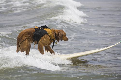 Trick Surfing